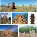 Introductory Case: Life of termites as eusocial insects