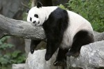 Thin content against lean content and why google panda hates thin content
