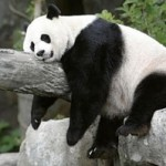 Definition of Thin Content vs Lean Content and why panda hates thin fishes