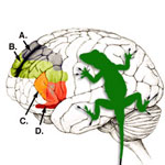 The Lizard Brain
