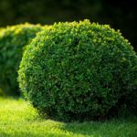What is evergreen content and how you can leverage it in your content strategy?